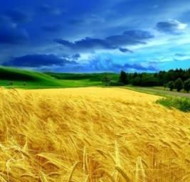 красивая картинка украинского пейзажа