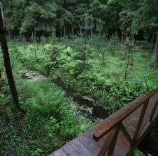 мостик в лесу