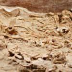 В Монголии обнаружили скелеты детенышей динозавров