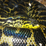 Коротко о Змеях – гороскоп