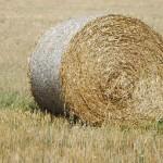 Эксперт об законопроекте «Об обороте земель сельскохозяйственного назначения»