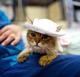 В Нью-Йорке завершилась кошачья неделя моды