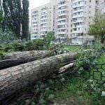 В Одессе проводят массовую срезку деревьев