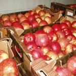 Транспортировка фруктов из Грузии