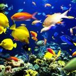 Виды экзотических рыб