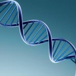 Ученые доказали возможность замены у взрослых бракованных генов