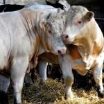 Отечественные аграрии уже начали процесс вхождения в Евросоюз
