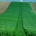 В Украине стартовала Программа партнерства, которая посодействует доступу малых сельхозпроизводителей к кредитам на развитие хозяйств