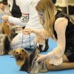 На выставке собак украинцы смогут увидеть собак с других стран