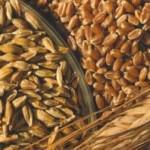 В Украине будет хороший урожай