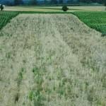 Семейные фермы: время для дискуссий закончилось