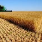 Украинская продукция попадет на мировой рынок
