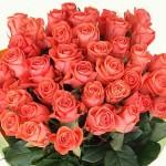 Букет из роз — идеальный подарок