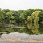Згуровский Парк основанный Петром Кочубеем